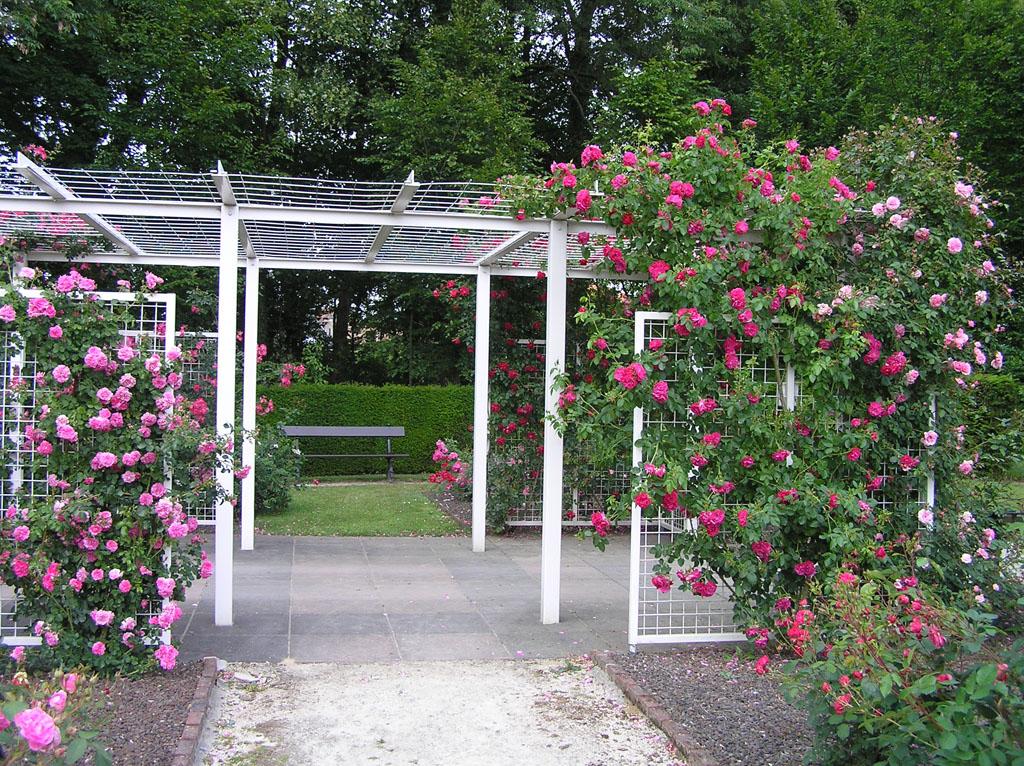 Виды опор для плетистых роз 6