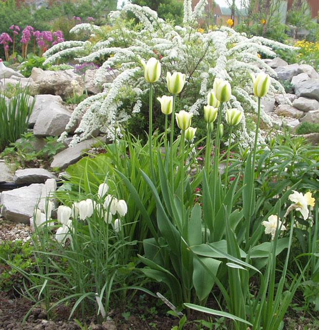 Однотонный сад