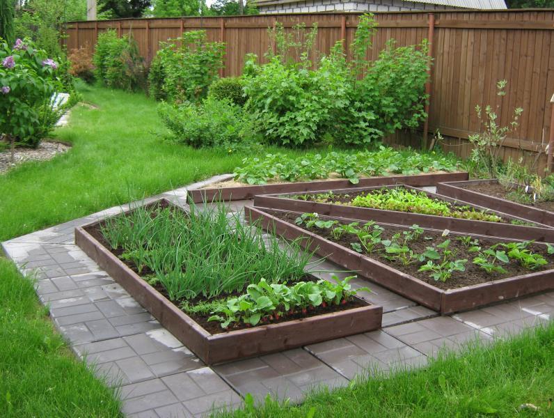 Сад огород фото своими руками