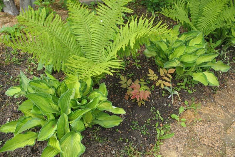 Форма для садовой плитки своими руками фото 98