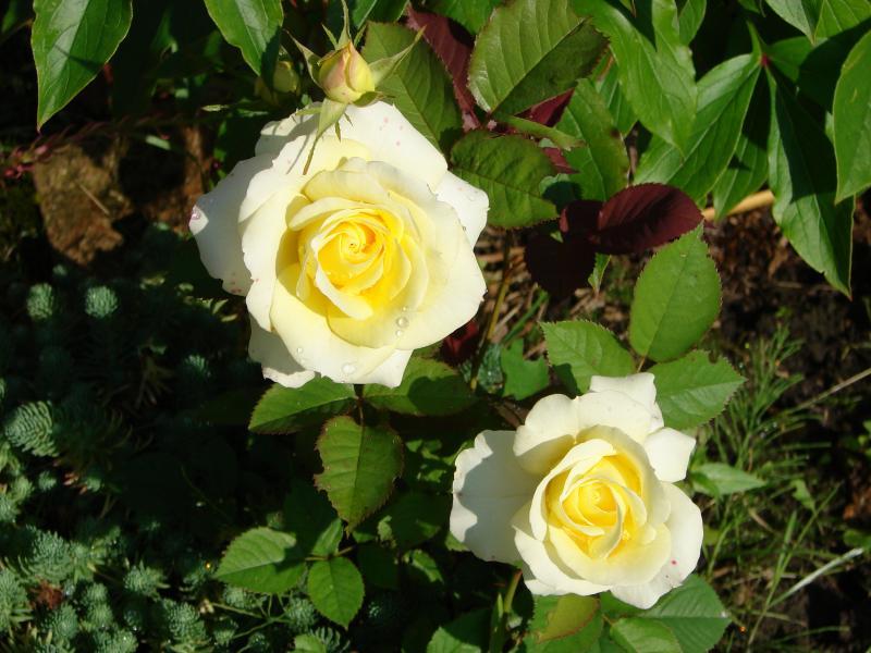 Цветы в горшках купить в obi - Цветоводы ...: flowersbouquets.ru/tsveti/kupit/tsveti-v-gorshkah-kupit-v-obi.html